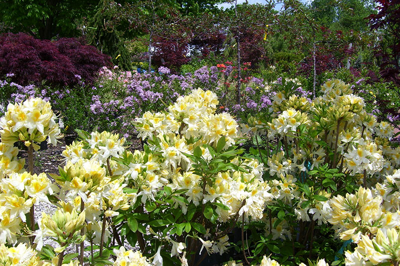 garden specials