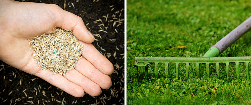 Spring Clean Up raking and seeding