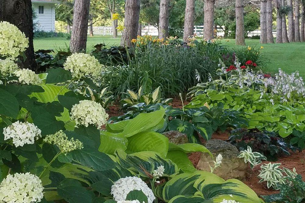 plantings-kevin