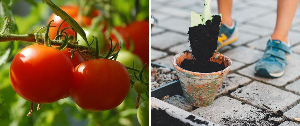 gardening for beginners vegetable potting soil