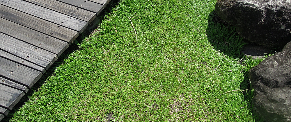 Preventing Water Damage by Grading Your Yard photo