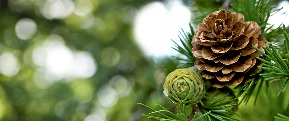 The Top 5 Benefits of Evergreens photo