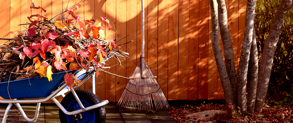 Fall Yard Clean-up and Winter Prep photo