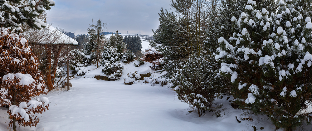 The Best Plants to Bring Winter Interest to Your Landscape photo