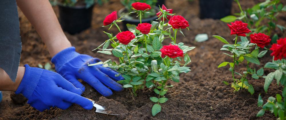 Go Organic with BioFlora Organic Fertilizers photo