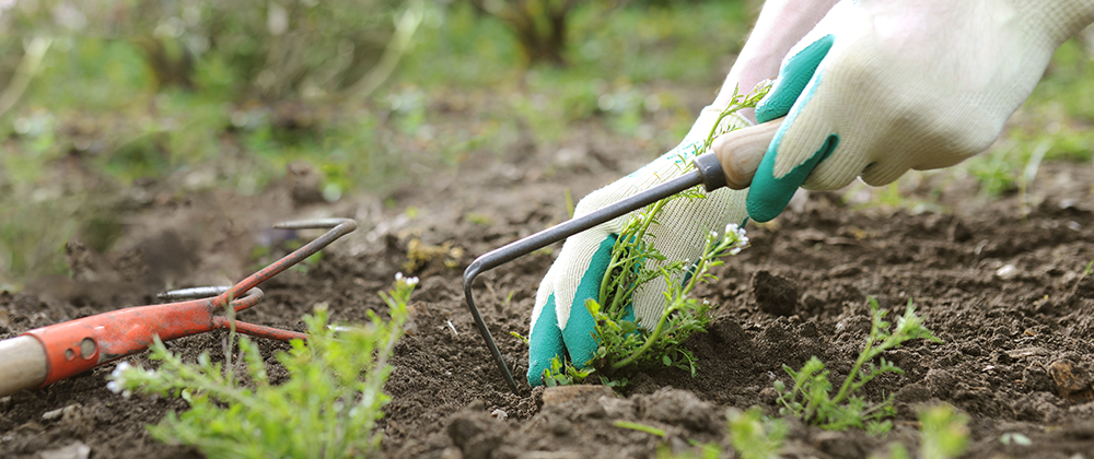 Spring Cleaning: Tips To Get Your Garden Ready photo