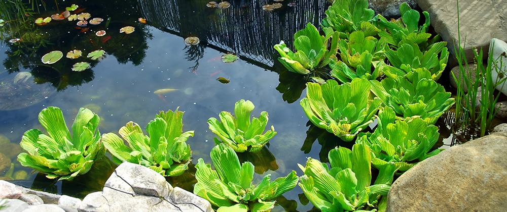 spring-pond-maintenance-tips-water