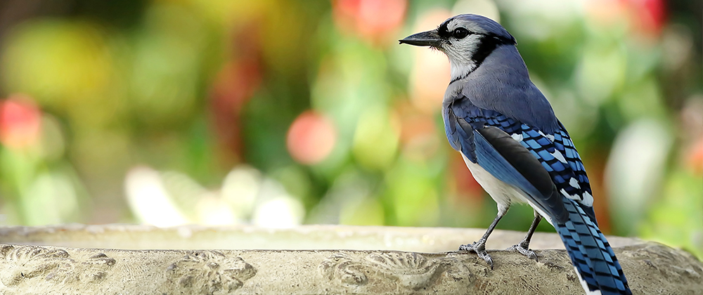 meyer-landscape-water-feature-blue-jay-bath