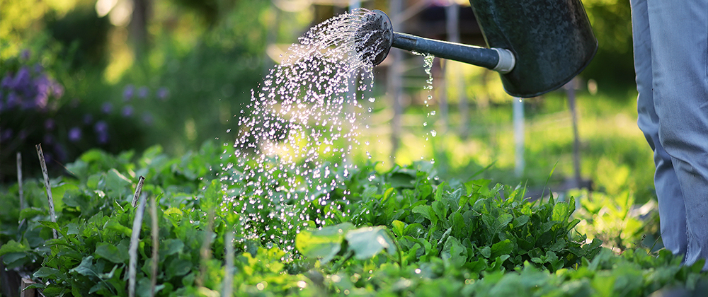 water-your-landscape-meyer-landscape-watering-vegetable-plants
