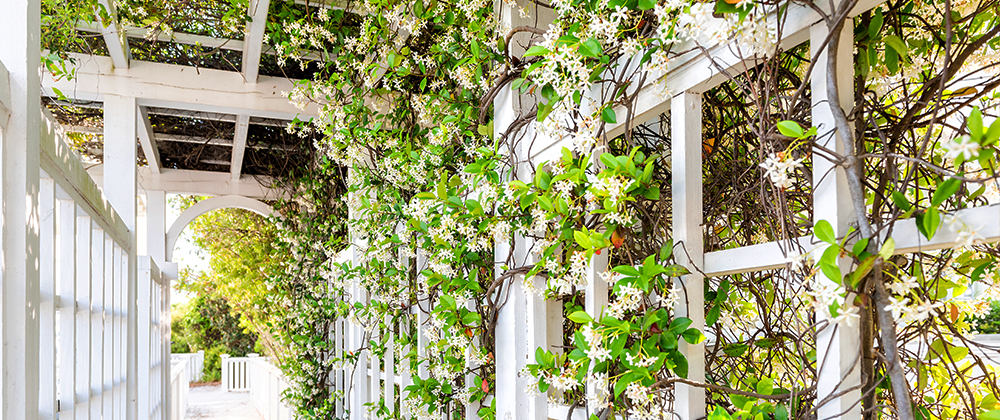 meyer-landscape-shade-for-the-patio-vines