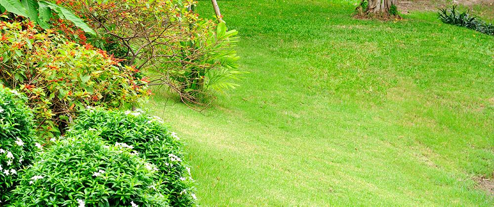 meyer-landscape-drainage-issues-sloped-yard