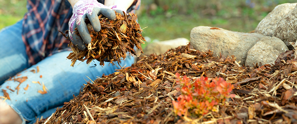 Mulch FAQ: Application, Common Issues, and More photo