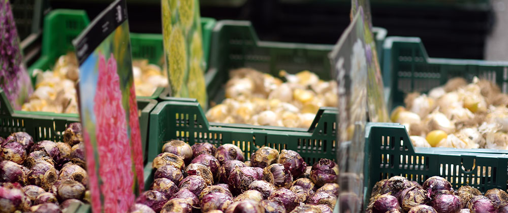 meyer-blog-choosing-healthy-bulbs