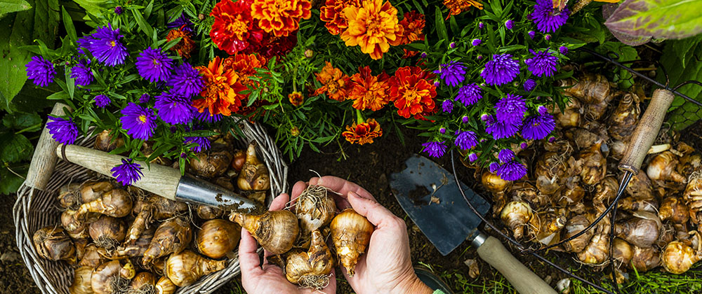 Your Cheat Sheet for Fall-Planted, Spring-Flowering Bulbs photo