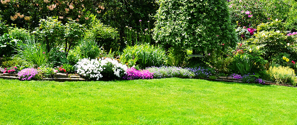 Tips for Controlling Weeds in Your Lawn photo