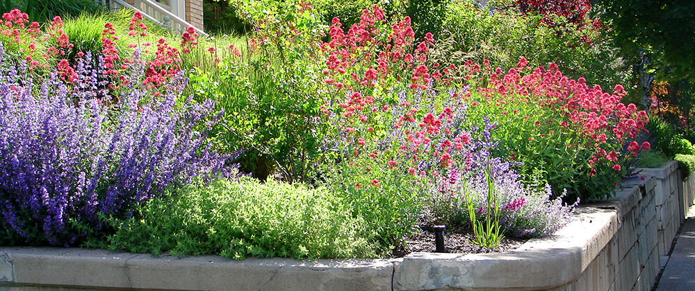 meyer-landscape-controlling-weeds-lawn-xeriscaping