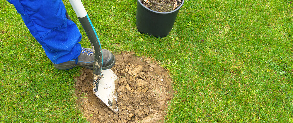 meyer-landscape-plant-fall-trees-digging-in-clay-soil