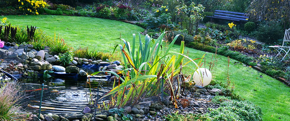 meyer-landscape-overwintering-pond-fish-backyard-pond