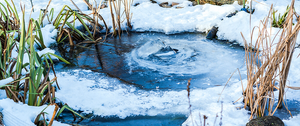 meyer-landscape-overwintering-pond-fish-frozen-pond