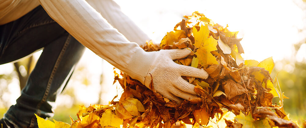 meyer-saving-leaves-for-compost-picking-up-leaves-fall