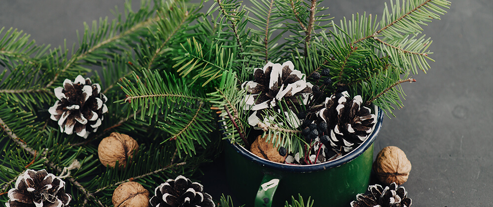 How to Decorate for the Holidays with Greenery and Plants photo