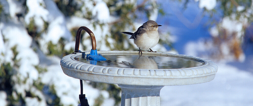 meyer-landscape-help-birds-winter-heated-birdbath