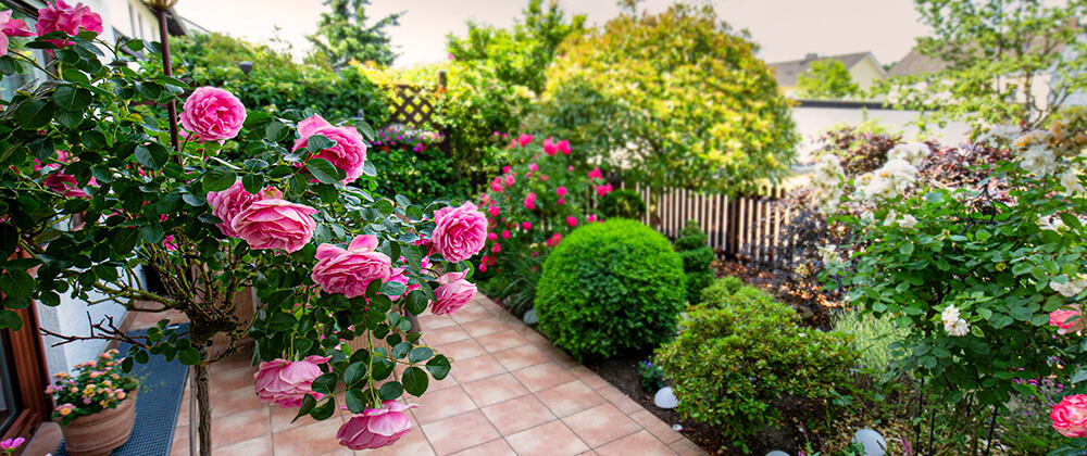 Our Top 10 Flowering Shrubs for Shade or Sun photo