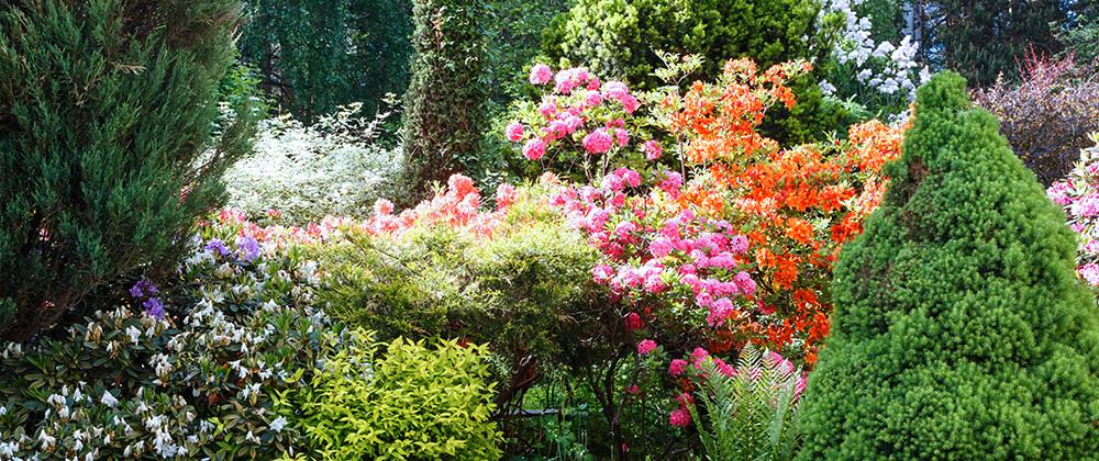 meyer low maintenance landscape ideas flowering shrubs