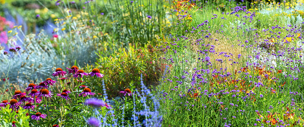meyer low maintenance landscape ideas wildflowers native plant garden