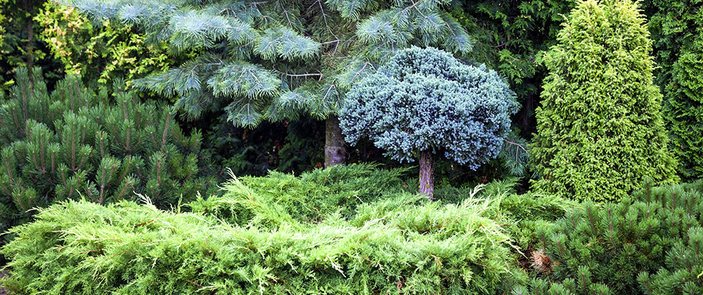 How to Grow a Forest In Your Own Backyard photo