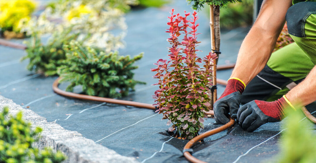 How to Water Your New Fall Trees photo