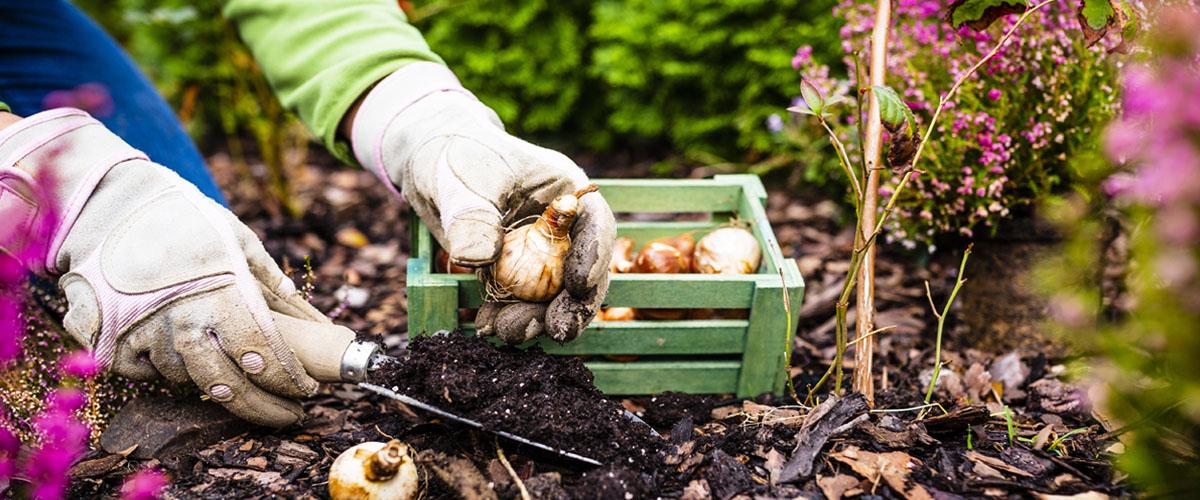 woman planting fall bulbs Meyer Landscape