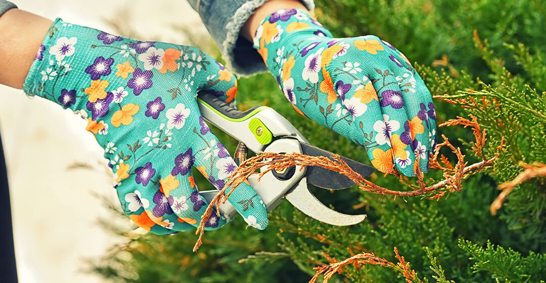 A Beginner's Guide to Pruning photo